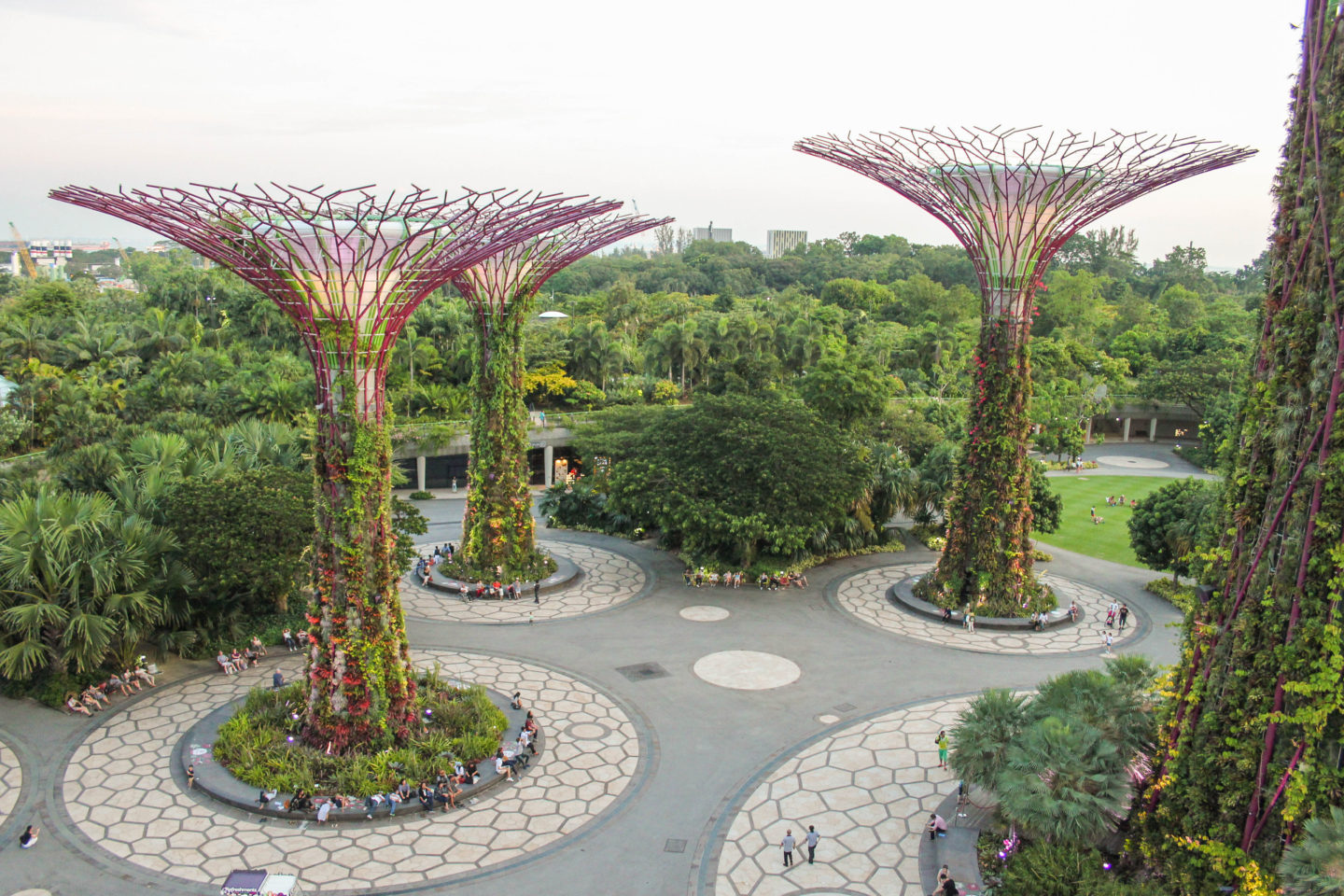 Singapore Supertree Grove Gardens By The Bay